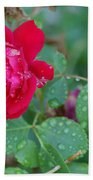 Morning Dew On A Rose Beach Towel