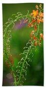 Morning Dew On Orange Flowers Beach Towel