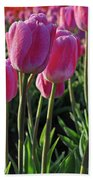 Morning Dew Tulips Beach Towel