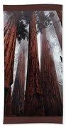 Morning Fog In Redwood Forest Beach Towel