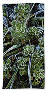 Morning Frost Beach Towel