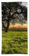 Morning In Wine Country Beach Towel