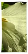 Morning Light - Trillium Beach Towel