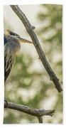 Morning Light On Great Blue Heron Beach Towel