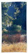 Morning Marsh Sunshine Beach Towel