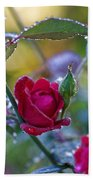 Morning Rose Beach Towel
