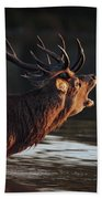 Morning Stag Beach Towel