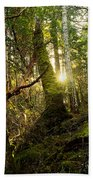 Morning Stroll In The Forest Beach Towel