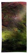 Morning Sun Rays On Old Japanese Maple Tree In Fall Beach Towel