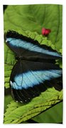 Morpho Butterfly Beach Towel