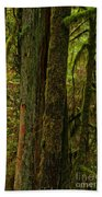 Moss Covered Giant Beach Towel