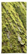 Moss On A Cedar Beach Towel