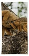 Mother And Baby Black Howler Monkeys Climbing Beach Towel