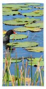 Mother Moorhen Beach Towel