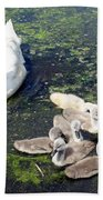 Mother Swan And Baby Cygnets Beach Towel