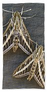 Moths Beach Towel