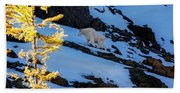 Mountain Goat And Larches Beach Towel