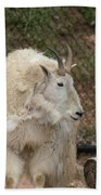 Mountain Goat Beach Towel