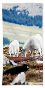 Mountain Goats 2 Beach Towel