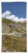 Mountain Goats At Columbine Lake - Weminuche Wilderness - Colorado Beach Sheet