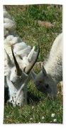 Mountain Goats Beach Towel
