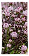 Mountain Laurel Bush Beach Towel