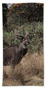 Mountain Nyala Beach Towel