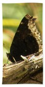 Mourning Cloak Butterfly Beach Towel