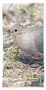 Mourning Dove 2 Beach Towel
