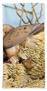 Mourning Dove And Chick Beach Towel