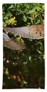 Mourning Doves Wings  Beach Towel