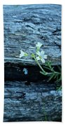 Mouse Eared Chickweed Beach Towel