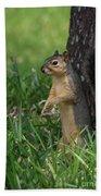 Mr. Squirrel Beach Towel