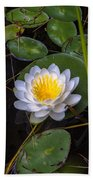 Mudd Pond Water Lily Beach Towel