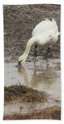 Muddy Tundra Swan Beach Towel