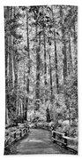 Muir Woods Bw Beach Towel
