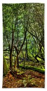 Muir Woods Rejuvenation Beach Towel