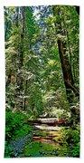 Muir Woods Study 22 Beach Towel