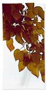 Mulberry Autumn Beach Towel