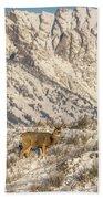 Mule Deer Buck In Winter Sun Beach Towel