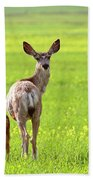 Mule Deer Doe And Fawn Looking Back Over Their Shoulders Beach Towel