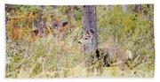 Mule Deer Doe In The Pike National Forest Beach Towel