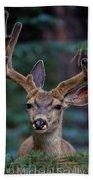 Mule Deer In Velvet 02 Beach Towel
