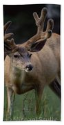 Mule Deer In Velvet 03 Beach Towel
