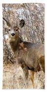 Mule Deer In Winter In The Pike National Forest Beach Towel