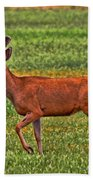 Mule Deer On The Sante Fe Trail Beach Towel
