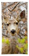 Mule Deer Portrait In The Pike National Forest Beach Towel