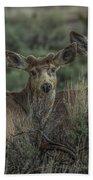 Mule Deer Visitors At Sunset Beach Towel