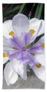 Multi-petal White Iris Flower. Very Unusual, Rare Form Beach Towel