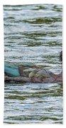 Muscovey Duck Beach Towel